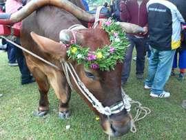 プユマ式結婚式 :婚礼会場。牛車と台東市長と普悠瑪族。