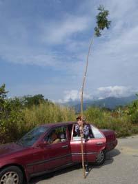 伐採した木を前に記念撮影