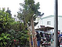 加工前の木を集めて立てかける